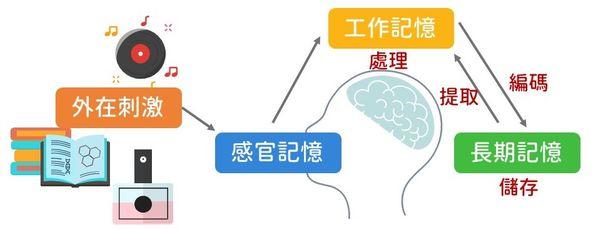 大腦記憶運作機制-記憶是如何形成的